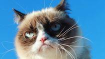 Sedih, Grumpy Cat Si Kucing Idola Netizen Mati