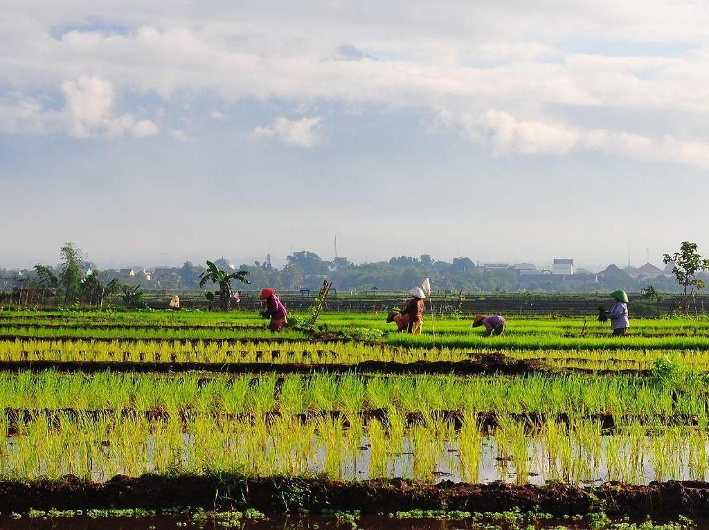 Hari Pangan Sedunia, Sudahkah Petani Indonesia Sejahtera?