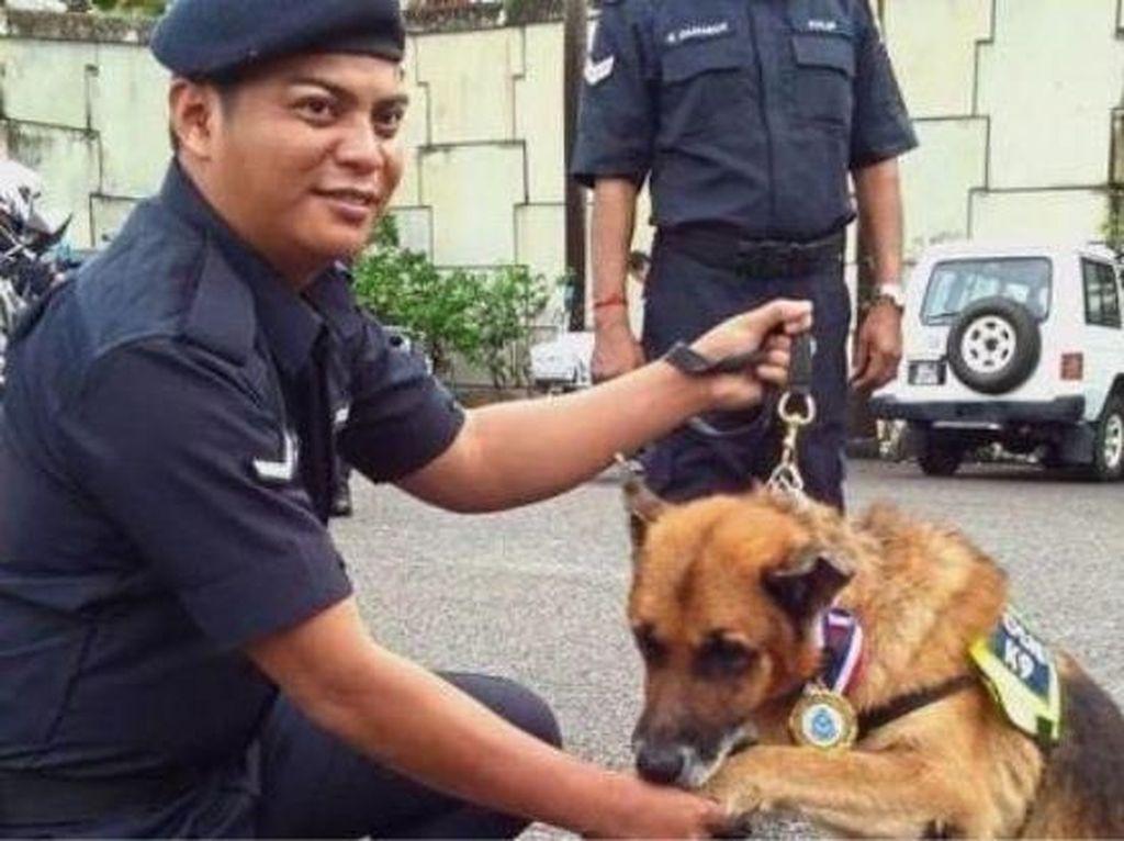 Cerita Macan Kecil Ungkap Kasus Pembunuhan di Malaysia