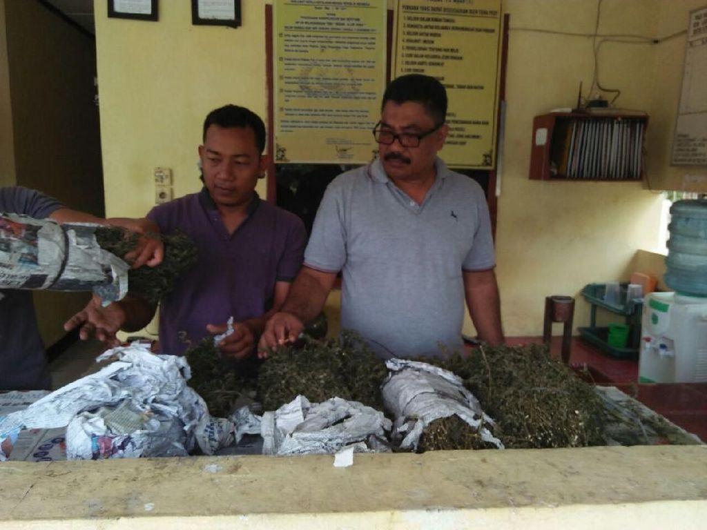 Warga di Aceh Utara Serahkan Temuan 1 Karung Ganja Kering ke Polisi