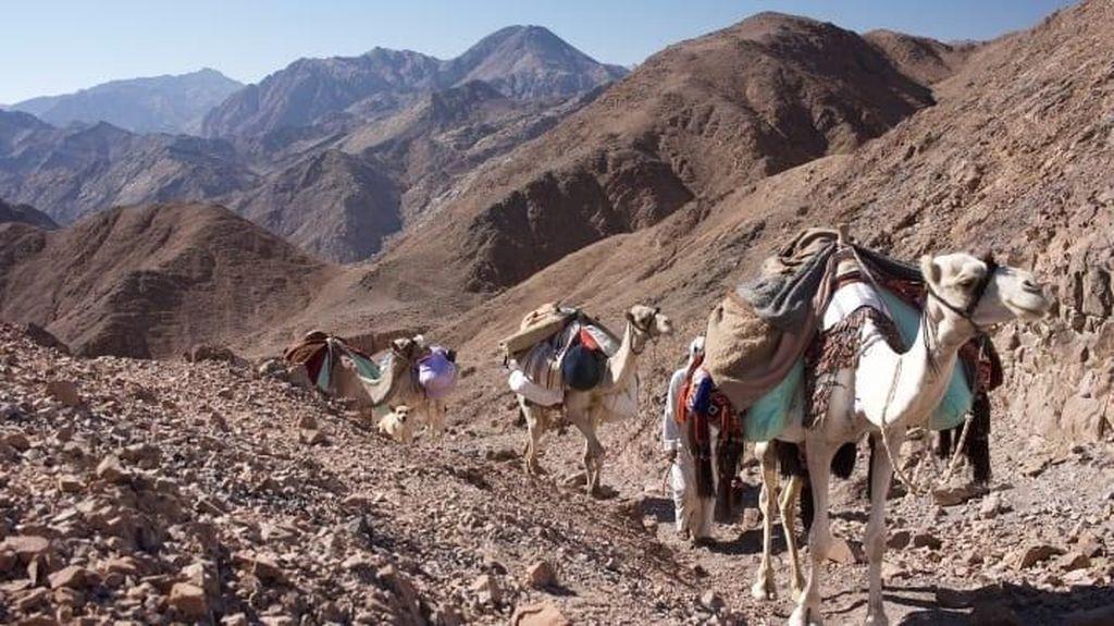 Foto: Jalur Trekking Pertama Manusia yang Eksotis di Mesir