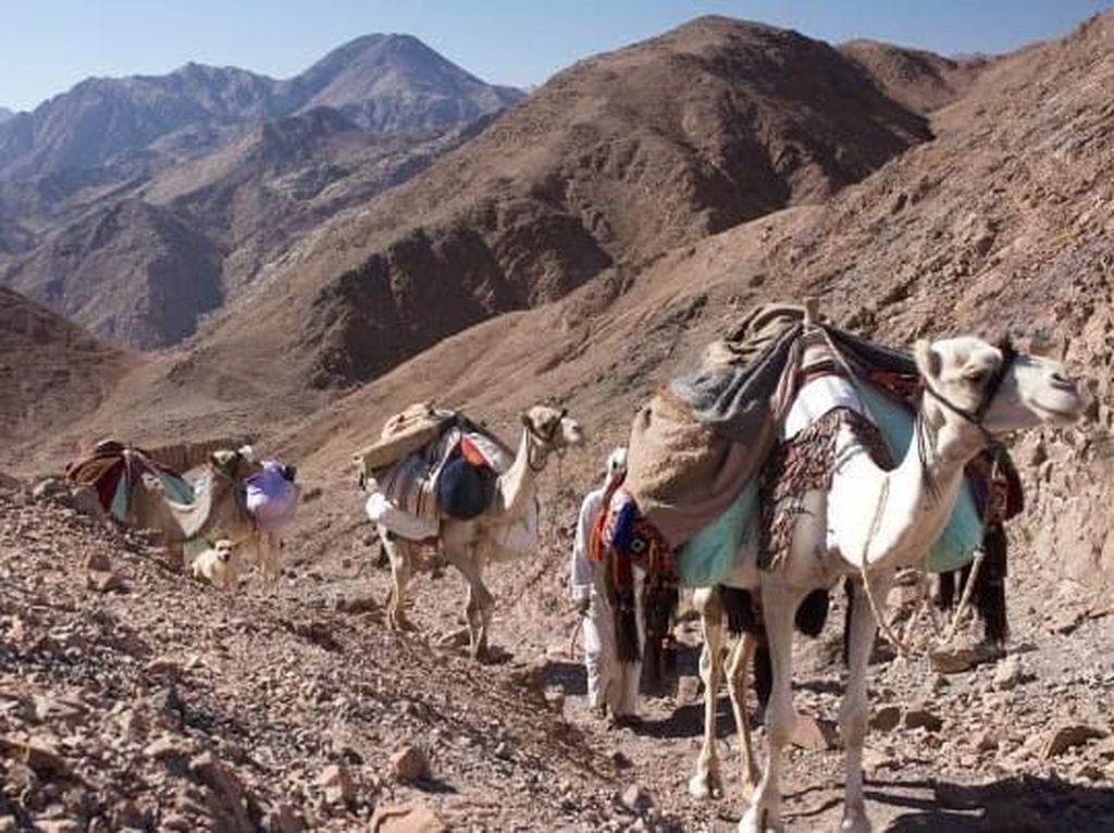 Jalur Trekking Pertama Manusia di Zona Merah Mesir