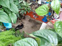Heboh Entok Hitam Penghuni Rumah 'Tengkorak' di Cimahi