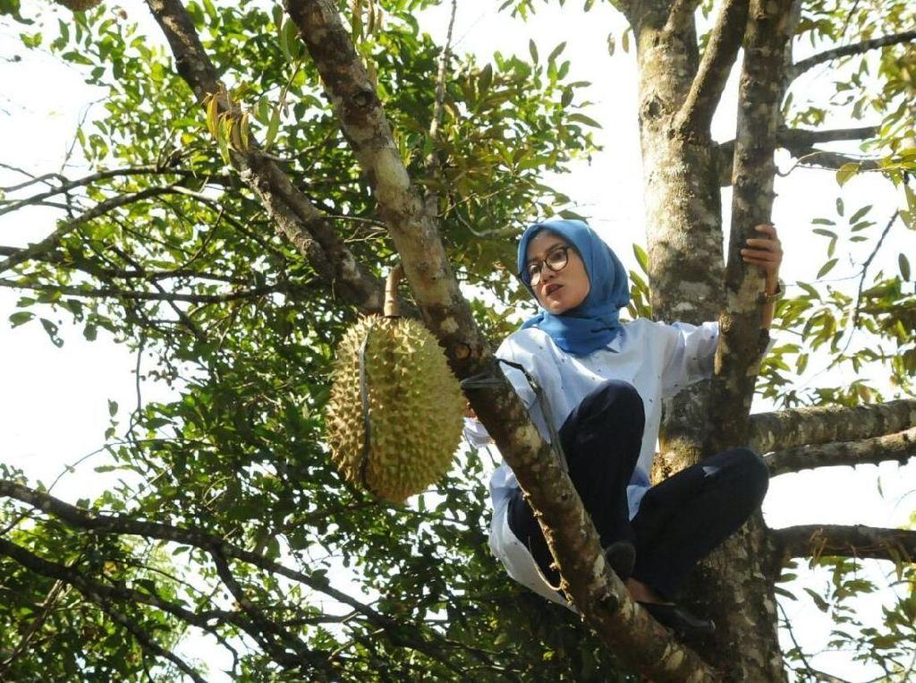 Aksi Bupati Lebak Iti Octavia Panjat Pohon Durian
