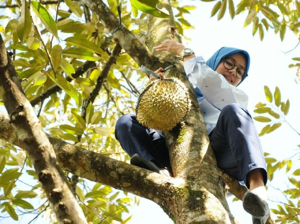 Bupati Lebak Iti soal Aksi Panjat Pohon: Kebiasaan Waktu Kecil