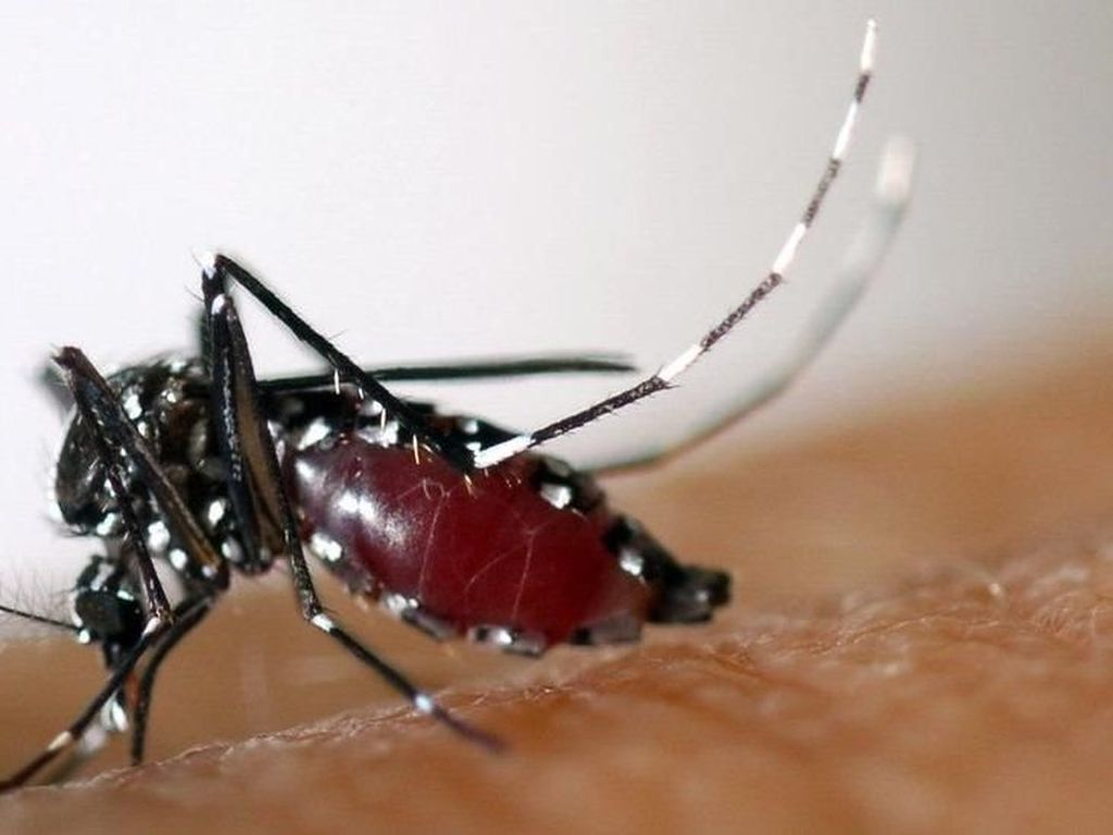 Harus Waspada, Ini Tanda-tanda Demam Berdarah Dengue