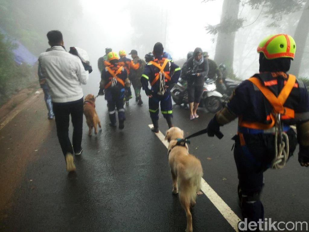 Foto: Anjing Pelacak Dikerahkan Polisi Cari Korban Longsor di Puncak