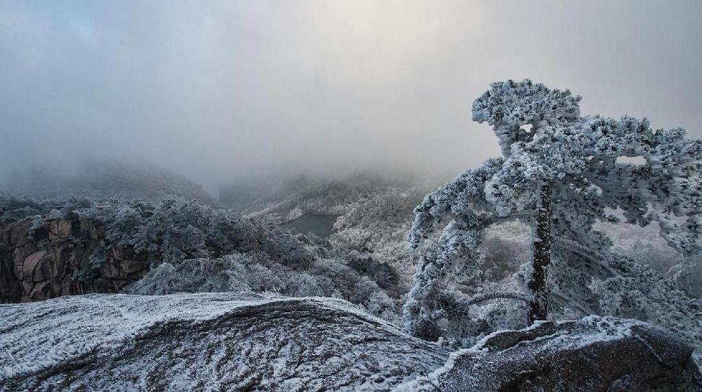 Foto: Penampakan Hutan Es di China