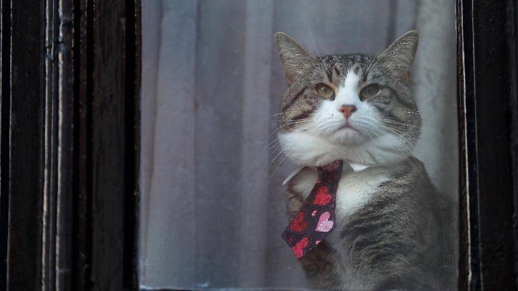 Foto: Kucing Julian Assange Ngintip dari Kedubes Ekuador di London