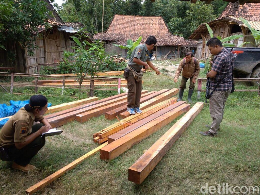 Polisi Ciduk Karyawan Perhutani Terkait Illegal Logging di Grobogan