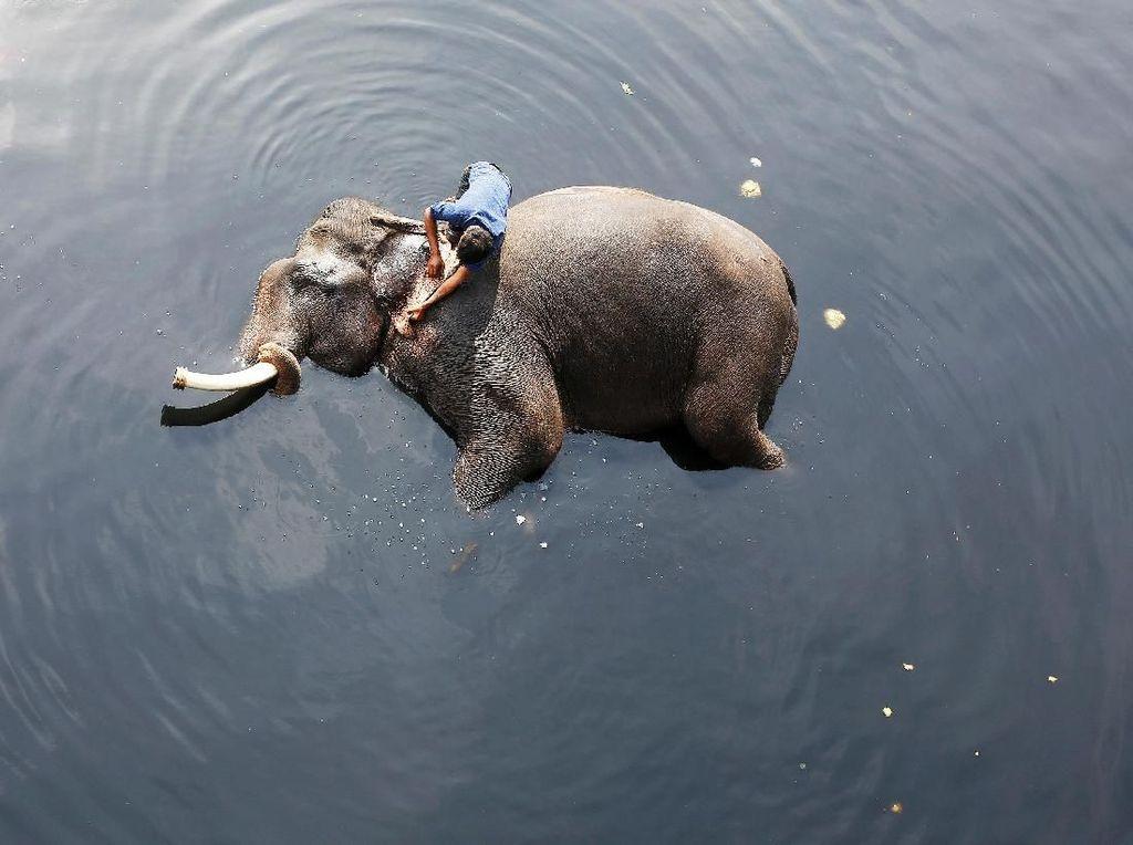 Momen Haru Satgas Selamatkan Gajah yang Terperosok ke Lubang