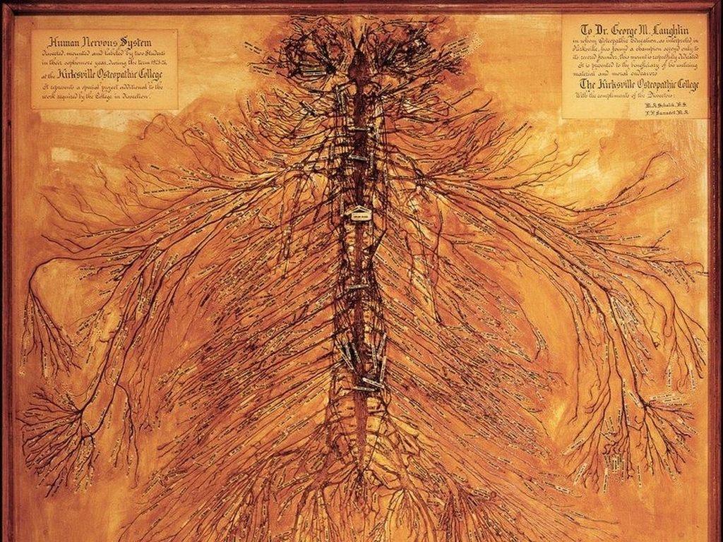 Begini Penampakan Sistem Saraf Tubuh Manusia Kalau Dibentangkan