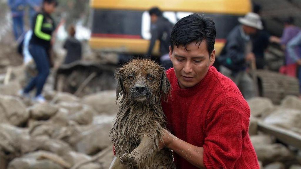 Foto: Saat Anjing-anjing Diselamatkan dari Banjir