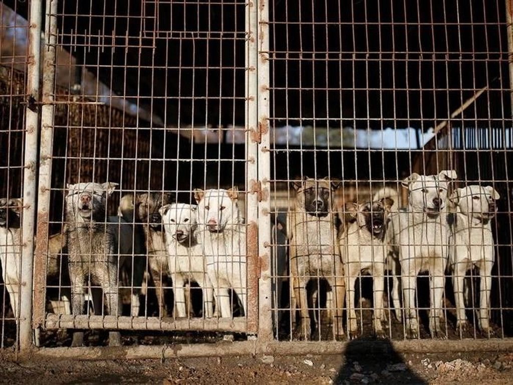 Dianggap Haram, Pemilik Restoran Ini Tolak Beri Sisa Makanan untuk Anjing