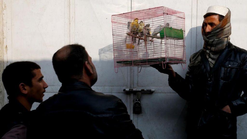 Foto: Cara Rekreasi di Afghanistan, Main Burung di Pasar