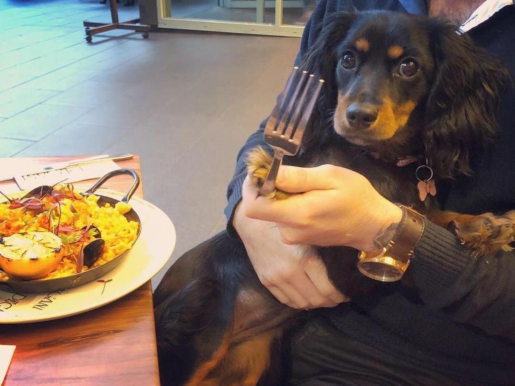 Aksi Menggemaskan Minnie si Anjing Foodies dan Serunya Makan di Kafe Minions di Singapura