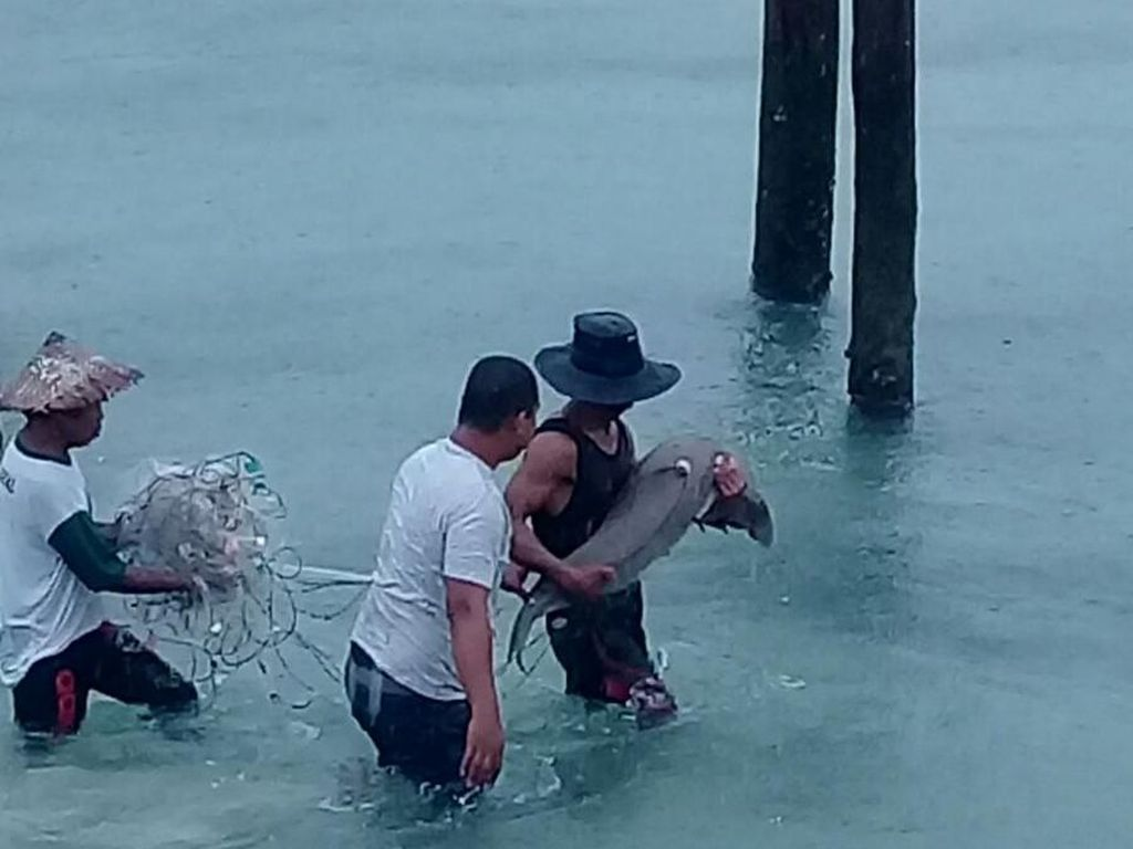 Nelayan di Tolitoli Selamatkan Dugong yang Sempat Terdampar