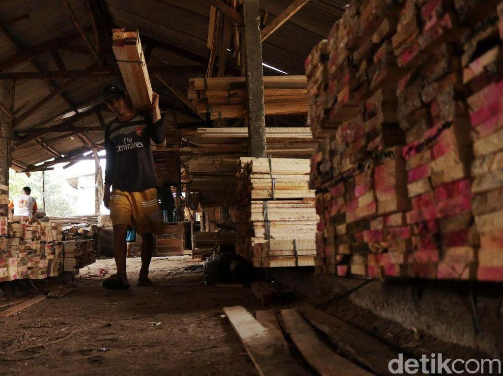 Mau Bisnis Kayu Sengon sampai Jati di Mana Beli Bibitnya?