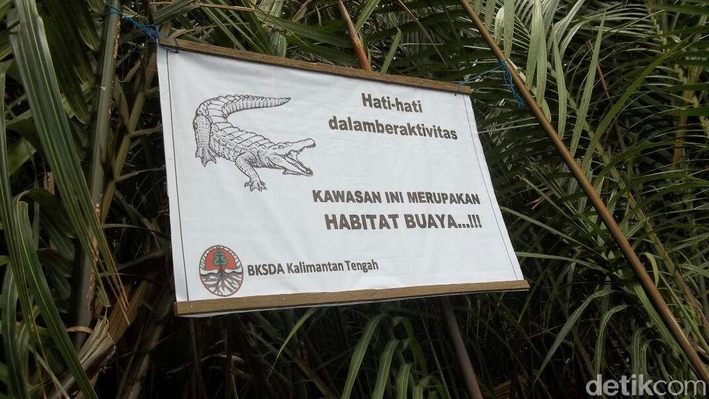Foto: Pasca Manusia Dimangsa, Plang Hati-hati Buaya Dipasang