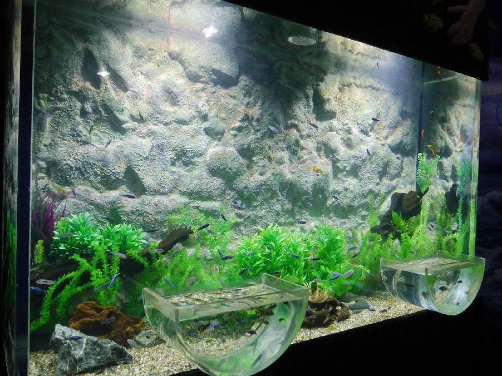 Foto: Akuarium Ajaib di Seaworld
