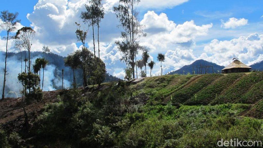 Potret Desa Indah Bebas Corona di Intan Jaya Papua