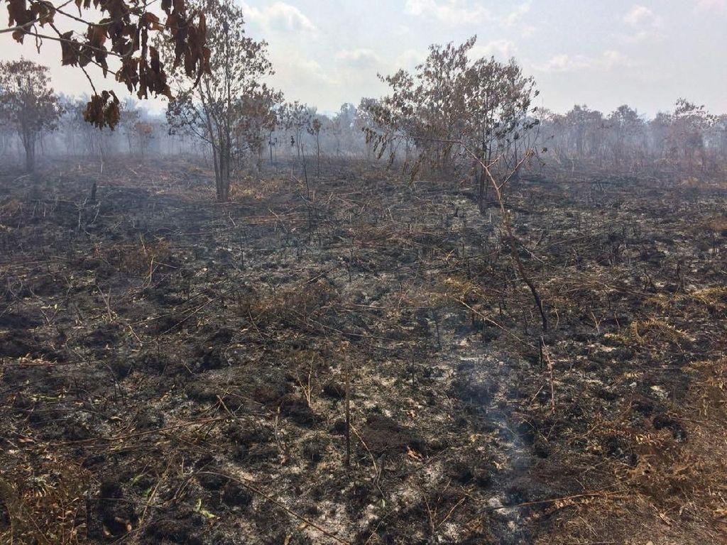 Hangus Berasap, Penampakan 135 Hektare Terbakar di Meranti Riau
