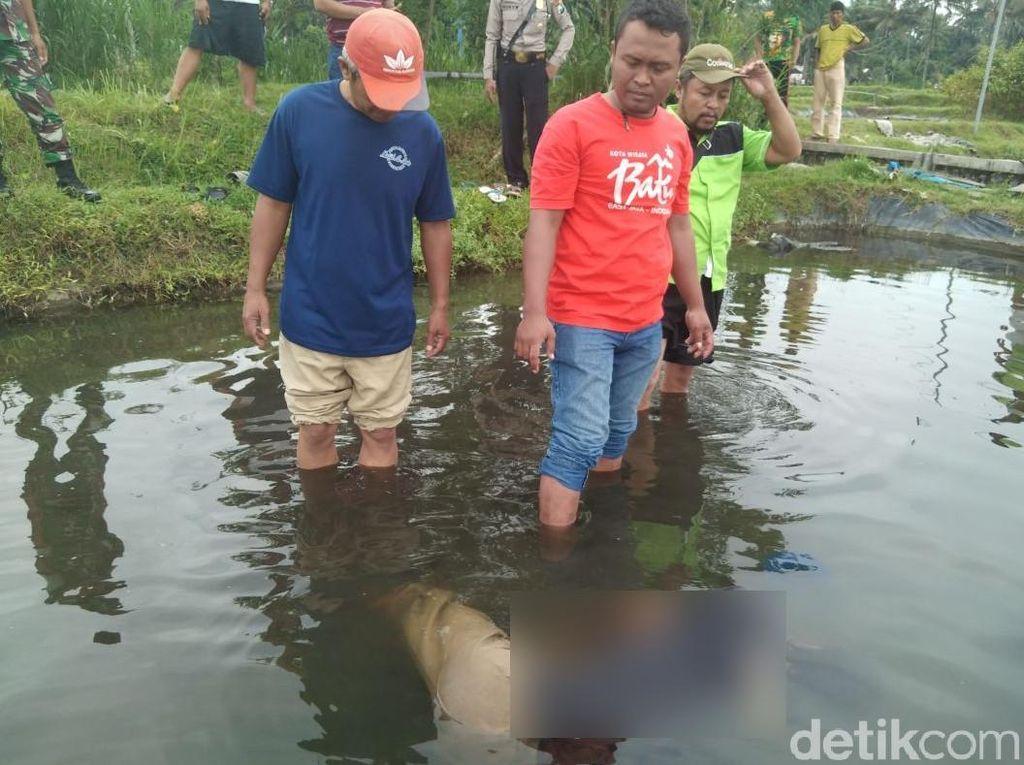 Kelelahan, Pencari Lumut Ditemukan Tenggelam di Kolam Ikan Koi