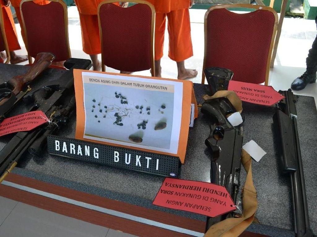 Penampakan Senapan Angin yang Dipakai Bunuh Orang Utan di Kaltim