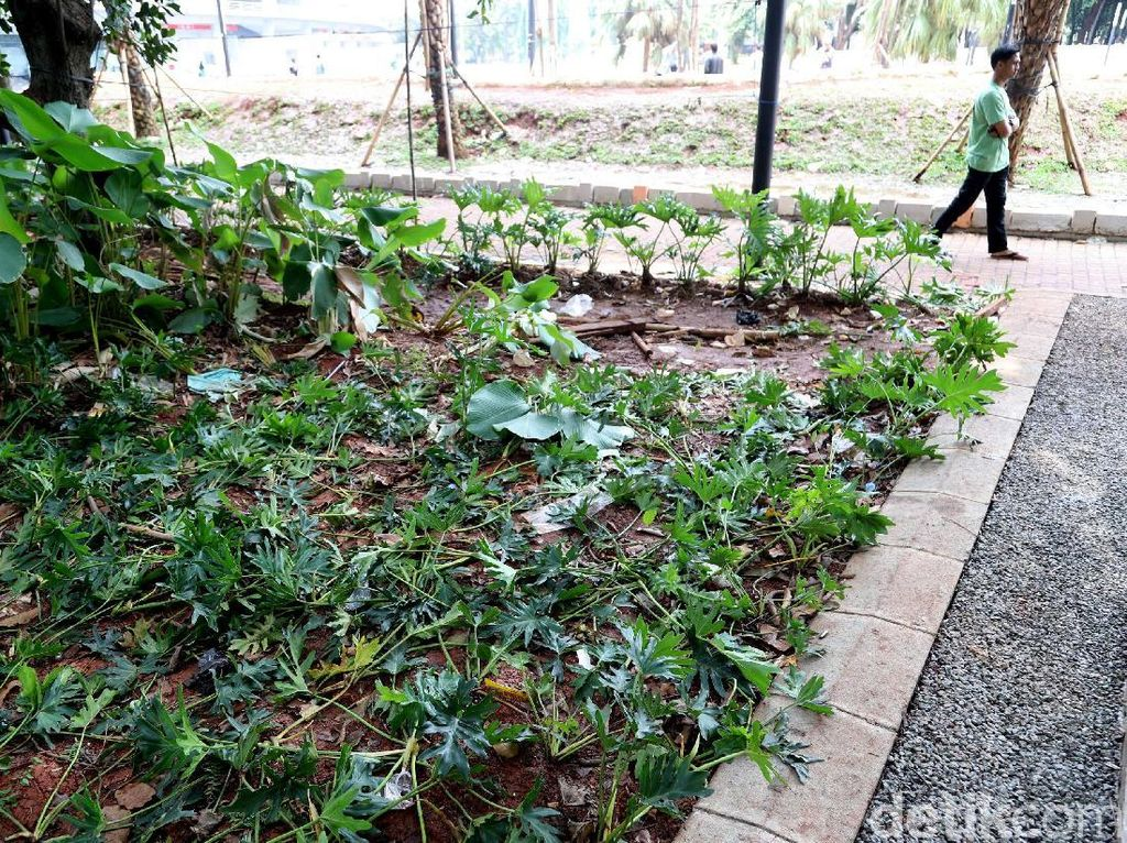 Taman Rusak dan Sampah Bertebaran di GBK yang Bikin Miris
