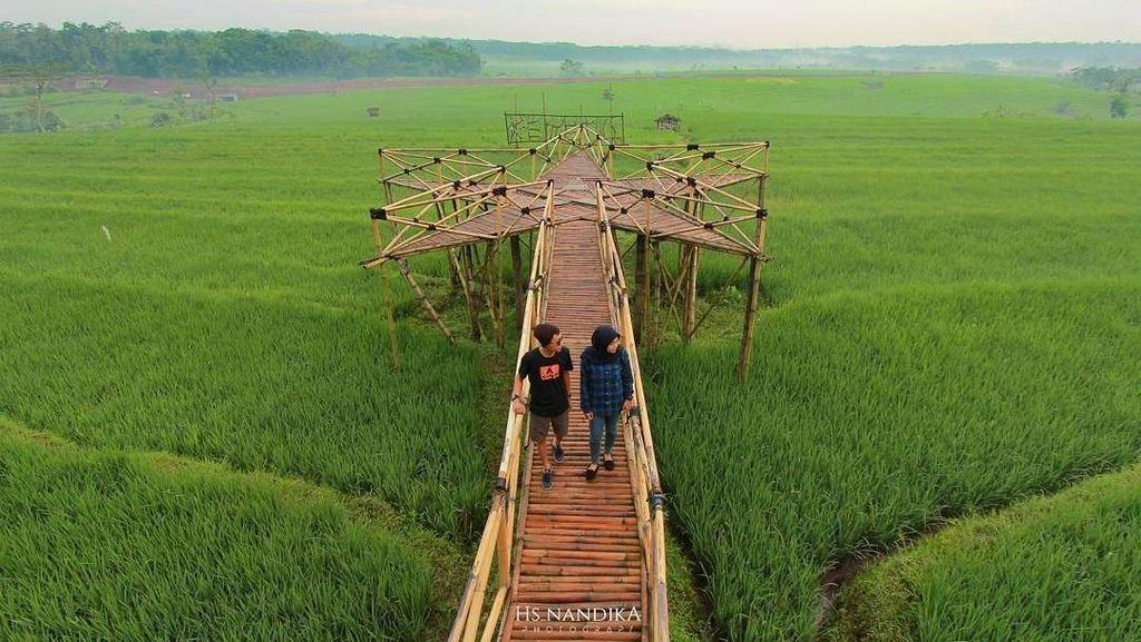 Foto: Sawah Zaman Now dari Semarang Sampai Bali