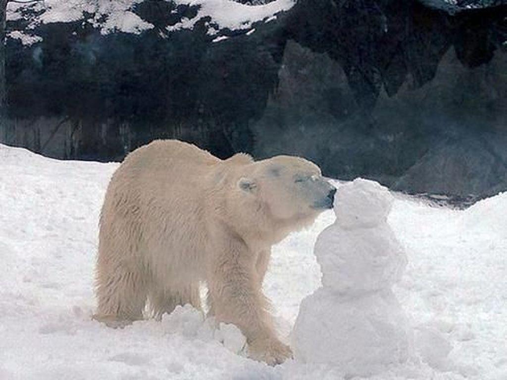 Melihat Kegemasan Beruang Tertua di AS Sebelum Akhirnya Disuntik Mati