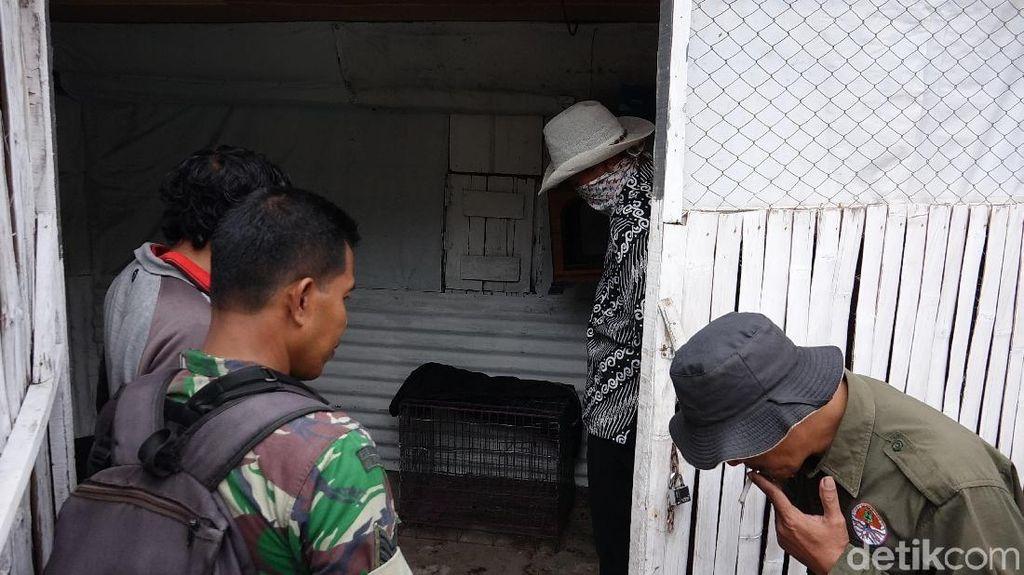 Sanca Jumbo yang Ditangkap Warga Probolinggo Hilang dari Kandang