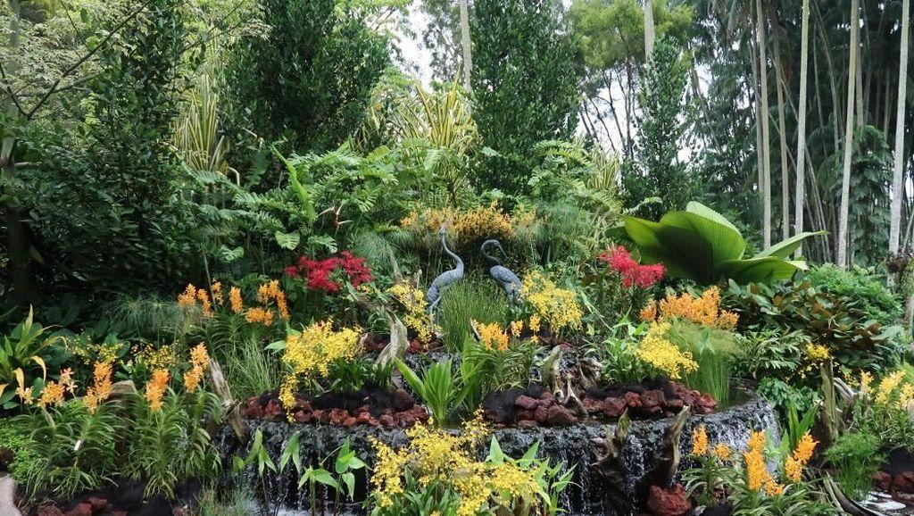 Potret Taman Anggrek Terbesar di Dunia