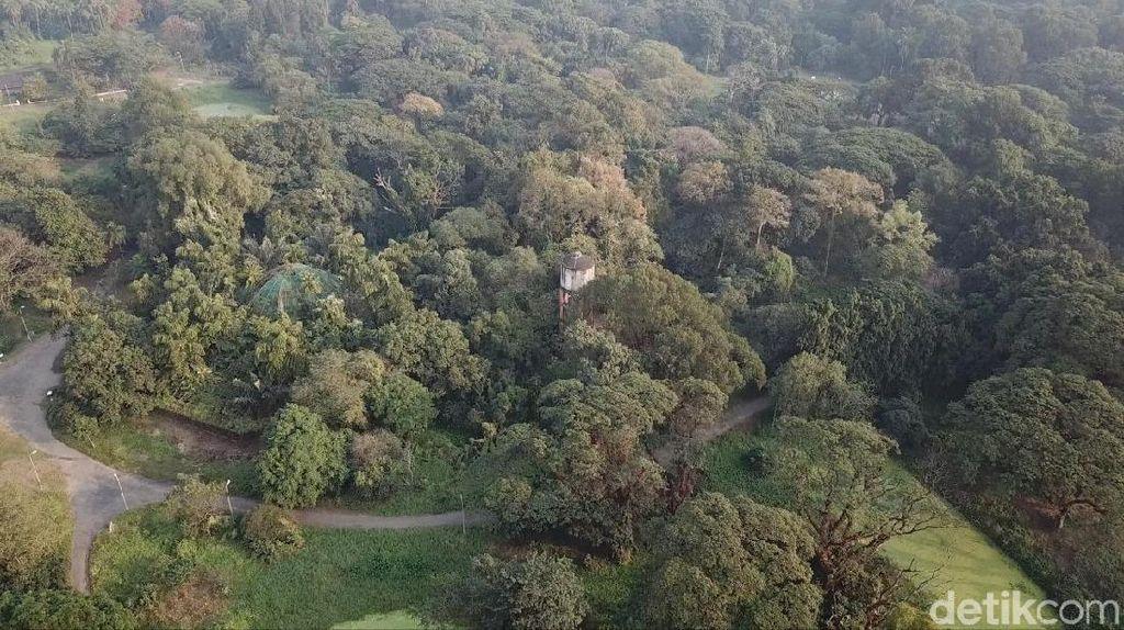 Foto Drone: Hutan dari Satu Pohon di India