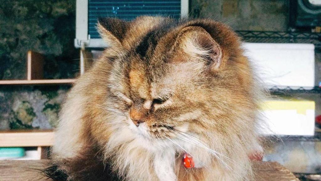 Foto: Ih Lucu, Desa Penuh Kucing di Taiwan