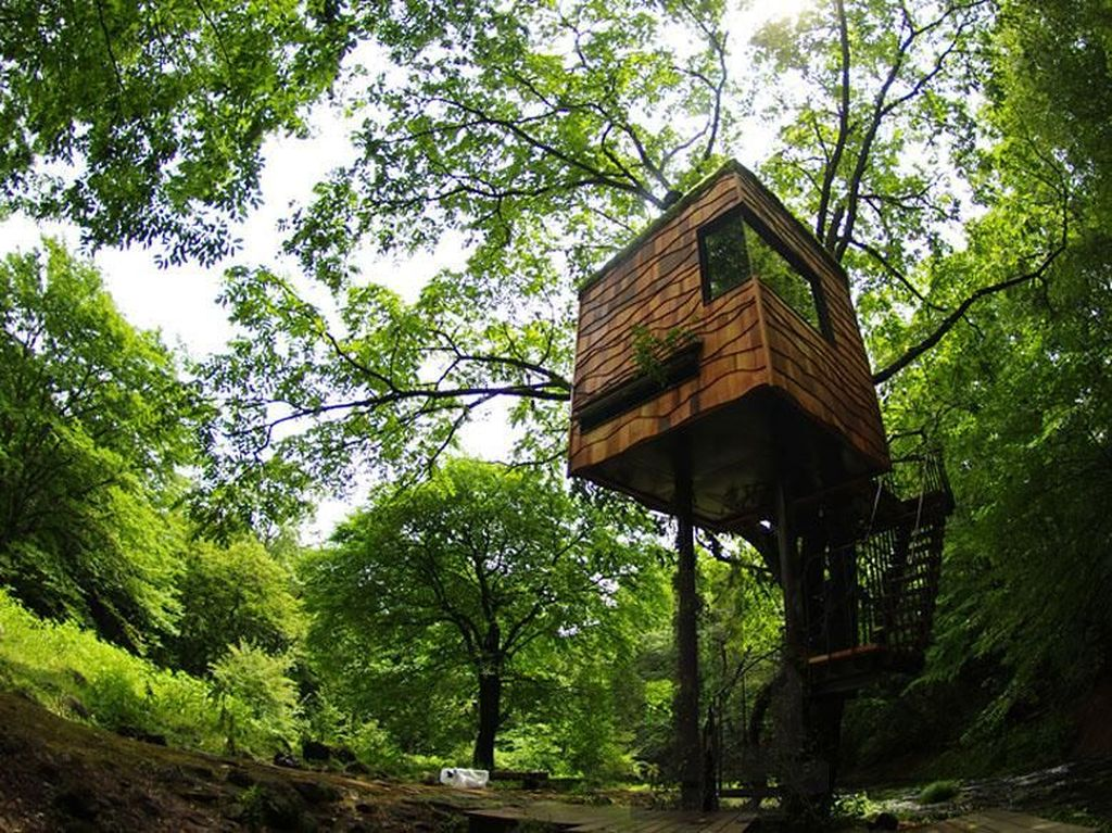 Ini Rumah Pohon yang Paling Amazing