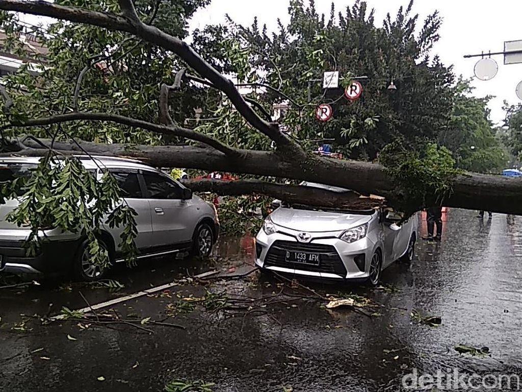 Pohon Besar Timpa Dua Mobil di Jalan Riau Bandung