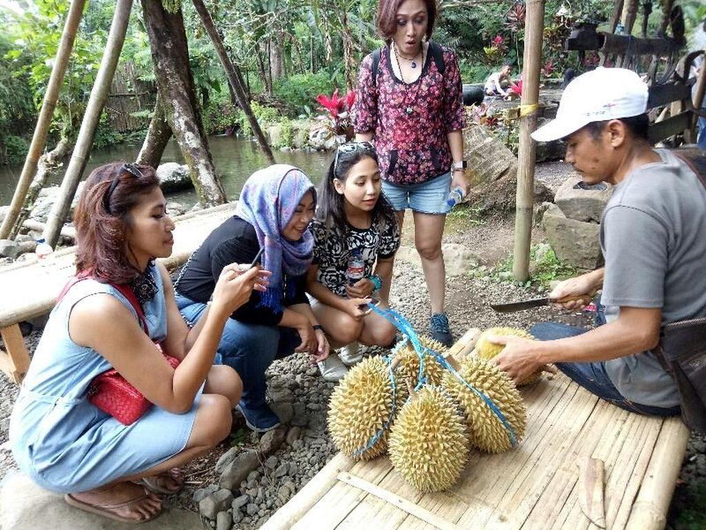 Liking Durian Garden, Sensasi Makan Durian Langsung di Bawah Pohon