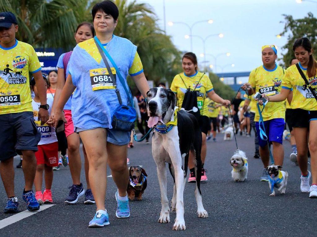 Unik! Lomba Lari Bareng Anjing Berhadiah Sampo di Filipina