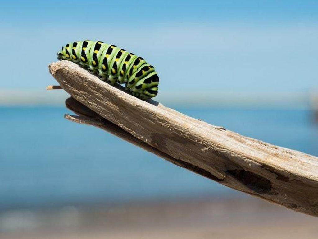 Lebih Dekat dengan Serangga Lewat Potret Macro yang Cantik