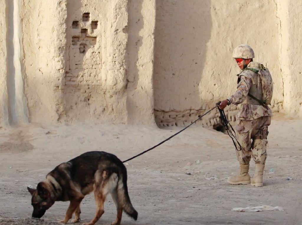 Foto: Nasib Miris Anjing Militer AS yang Diduga Ditelantarkan