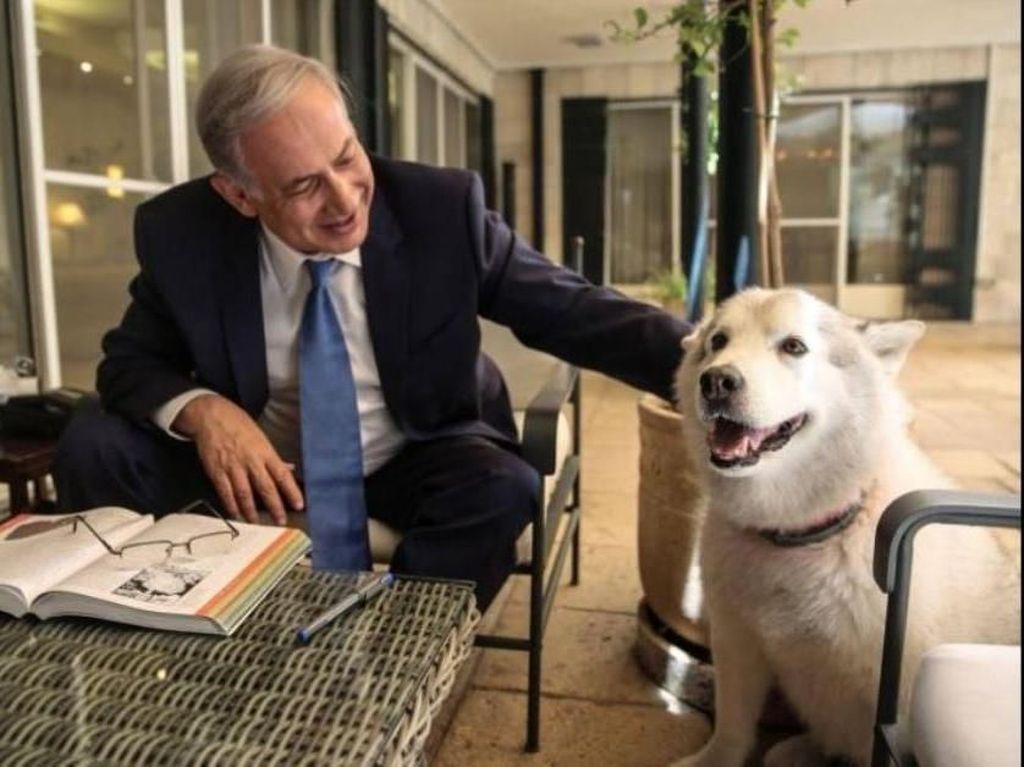 Kesedihan PM Israel Saat Anjing Kesayangannya Mati