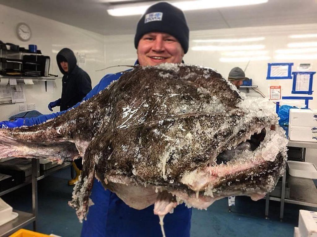 Ikan Monkfish yang Menyeramkan Mulai Dipasarkan Sebagai Seafood Enak dan Terjangkau