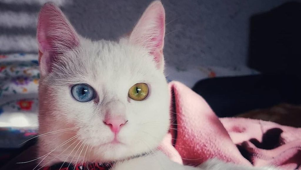 Gemas! Hewan Ini Idap Heterochromia, Punya Dua Warna Mata Berbeda