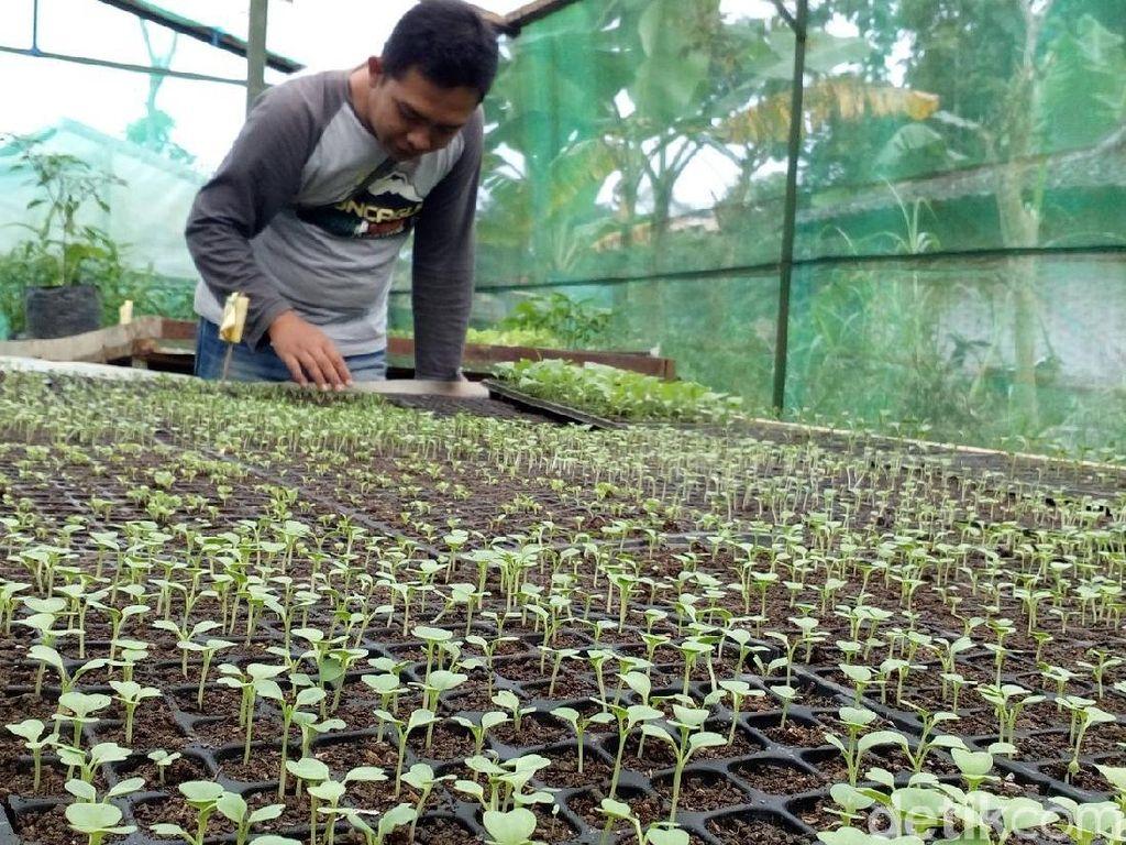Mengenal Brenjonk, Kampung Organik di Lereng Gunung Mojokerto