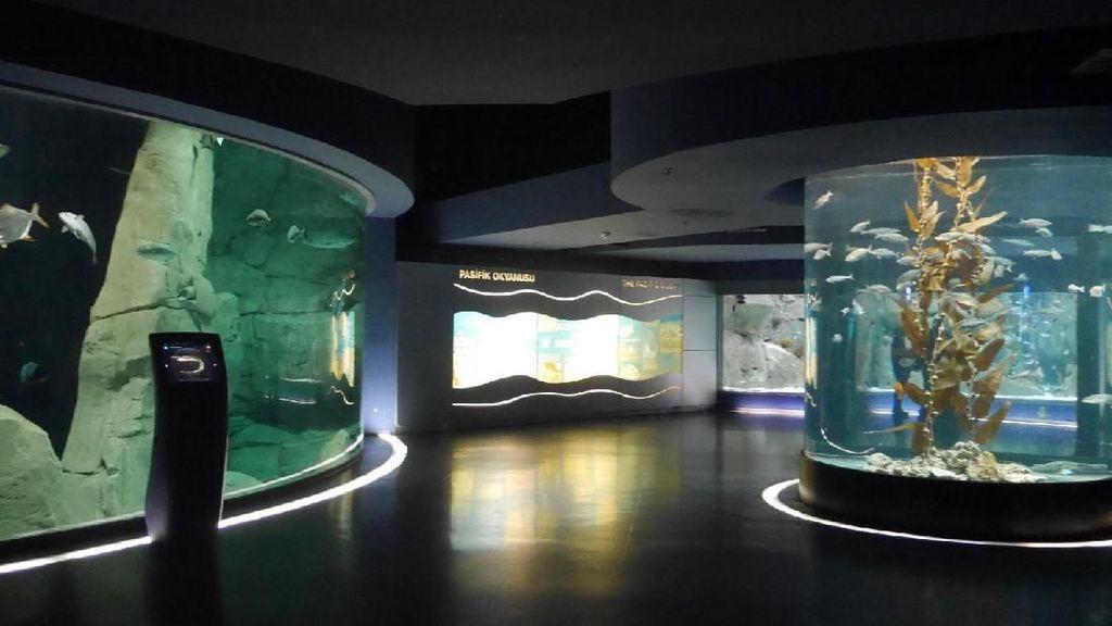 Foto: Seperti Ini Akuarium Tematik Terbesar di Dunia