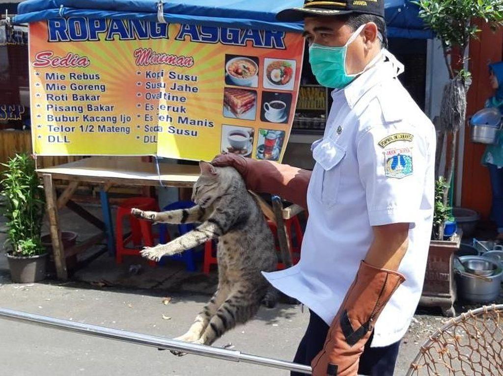 Penangkapan Kucing-kucing Liar yang Bikin Resah di Jakarta Pusat