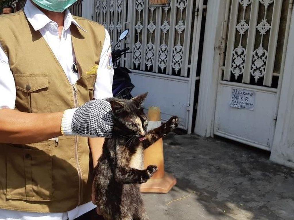 Kucing Liar Ditangkapi, Aktivis Khawatir Kondisi Penampungan