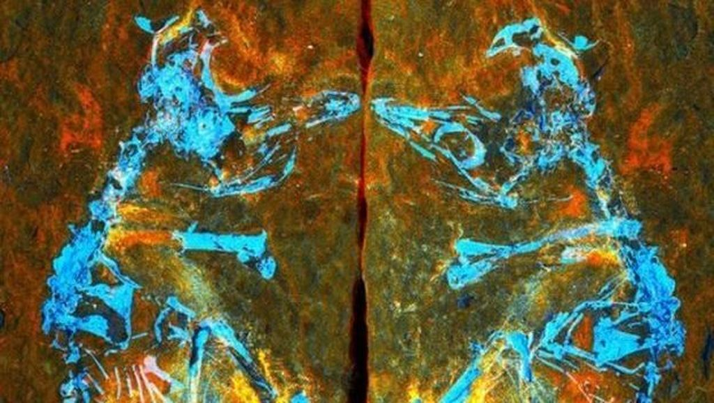 Penampakan Fosil Burung Terkecil yang Hidup 127 Juta Tahun Lalu