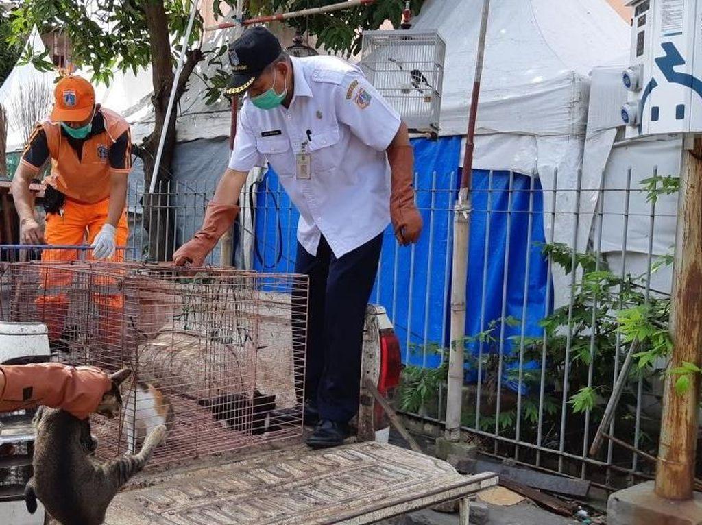 Bikin Warga Resah, Puluhan Kucing Liar Ditangkap di Jakpus